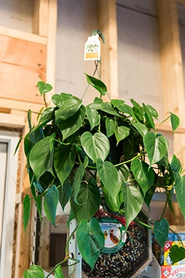 How to Care for Indoor Plants in the Winter