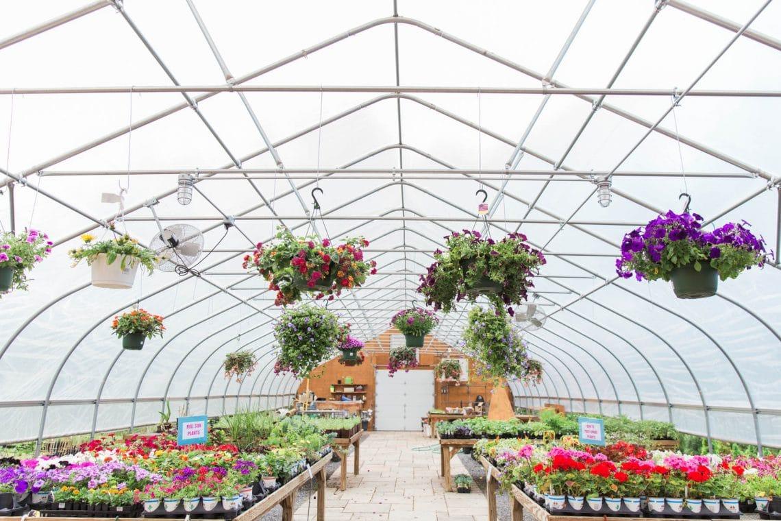 Kalleco Nursery Greenhouse in Spring
