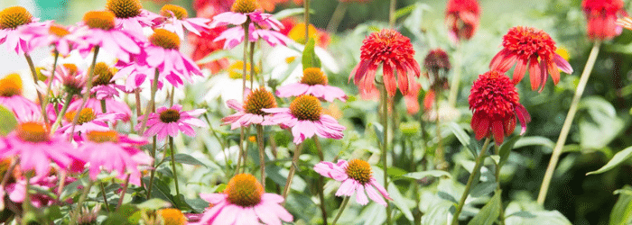 Perennials Page Header